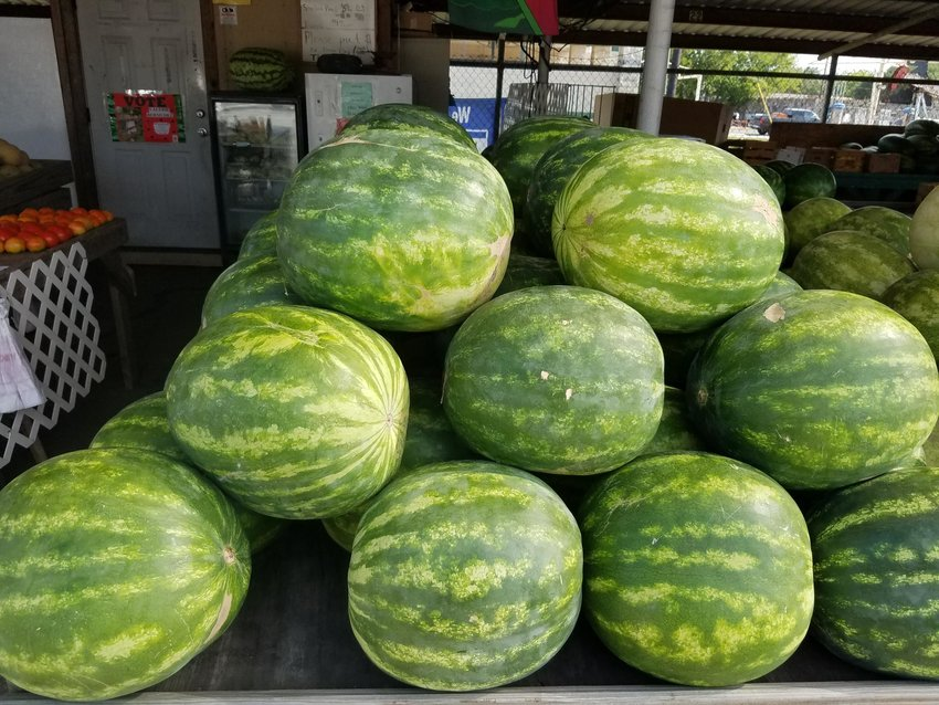 Watermelons are the big stars this weekend as the 66th annual Watermelon Thump Festival kicks off in Luling tonight and runs through Sunday.