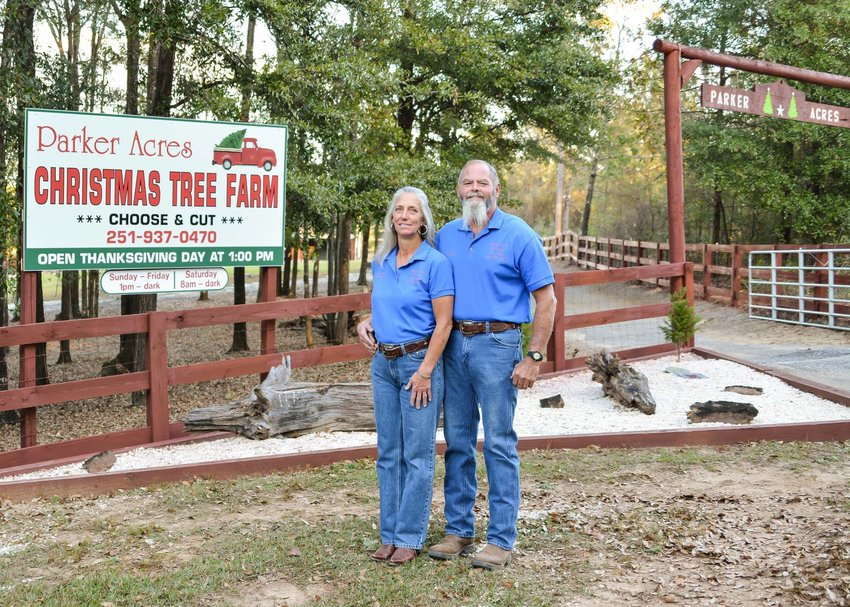 2.Tim and Brenda Parker planted their trees four years ago and opened the farm to the public one year early after hurricane season damaged a third of their crop. The farm is located on Old Ganey Road in Bay Minette.