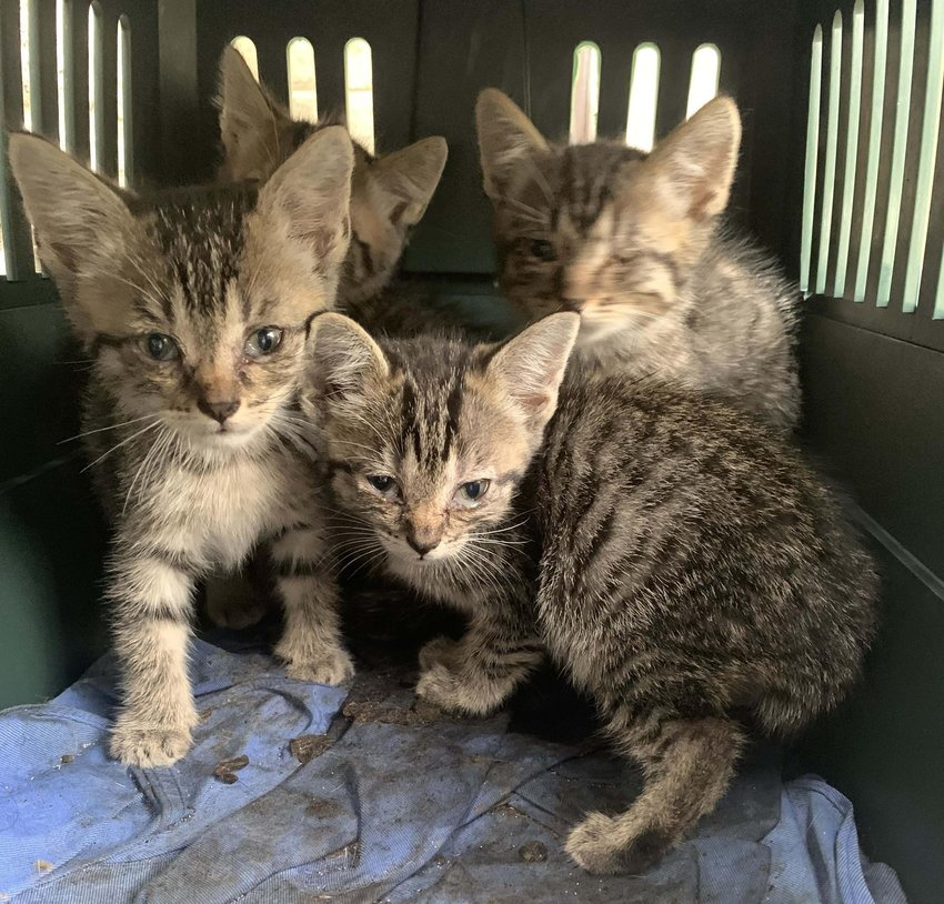 Many of the abandoned kittens and cats now recovering at The Haven are in need of medical attention.