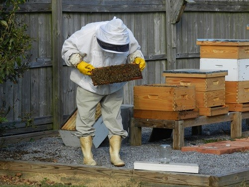 A local beekeeper tends to a hive.