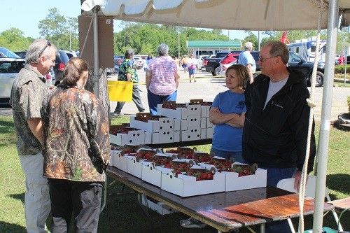 A vendor sells strawberries at last year's Baldwin County Strawberry Festival in Loxley.