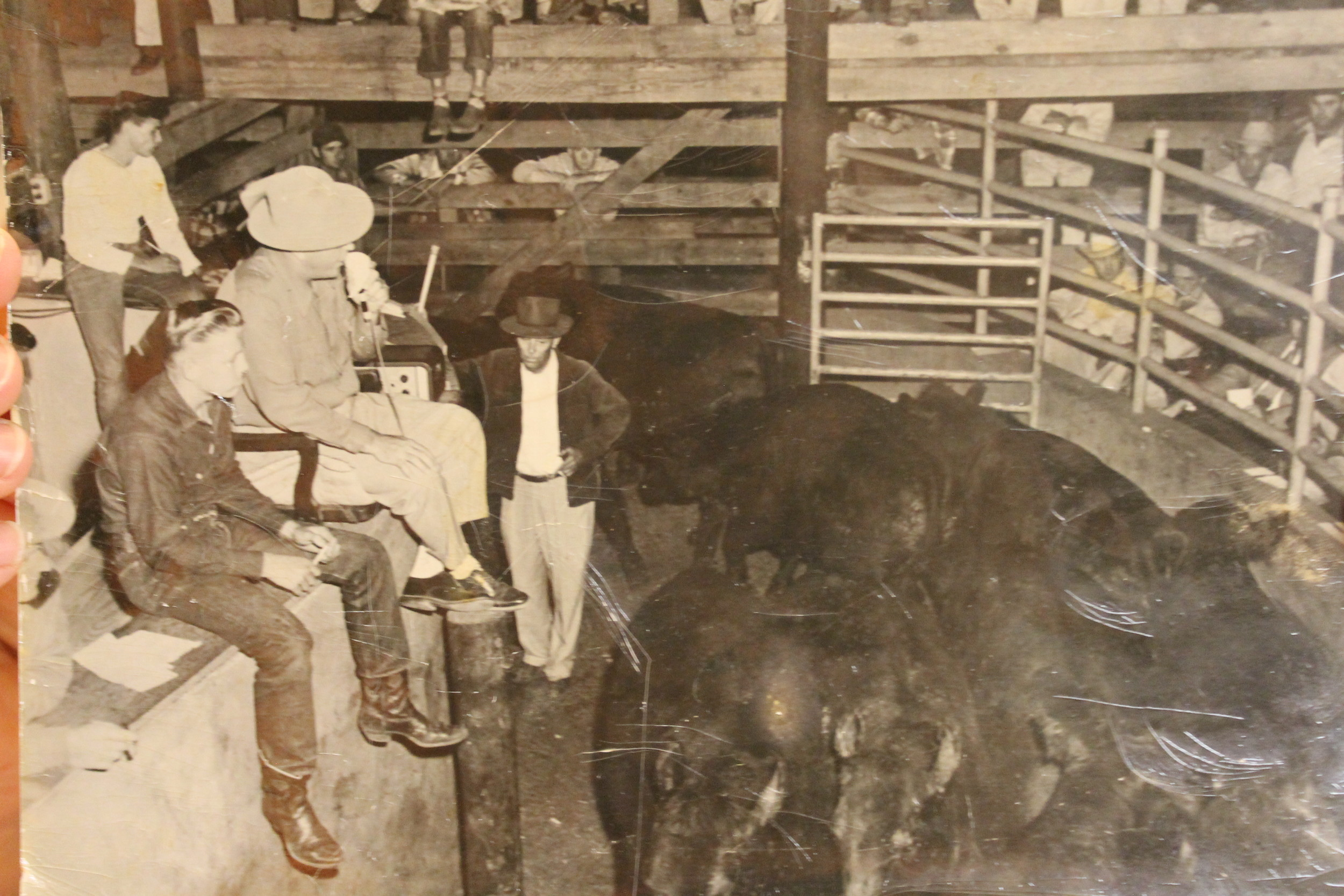 Jimmy Driver began working at the stockyard at age 10. He is seen here sitting above the auction ring on the left.