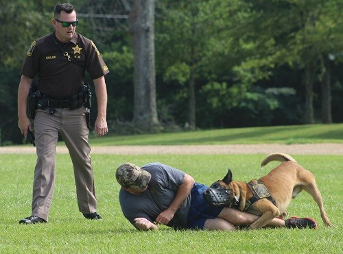 "Deputy Jason Kolbe and his canine partner Aron take down a ""suspect"" during a demonstration July 18 at Baldwin County High School in Bay Minette."
