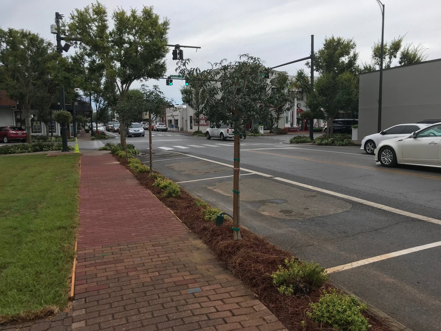 Chinese pistache trees planted on Section Street in Fairhope in August will be replaced with larger varieties of the same species.