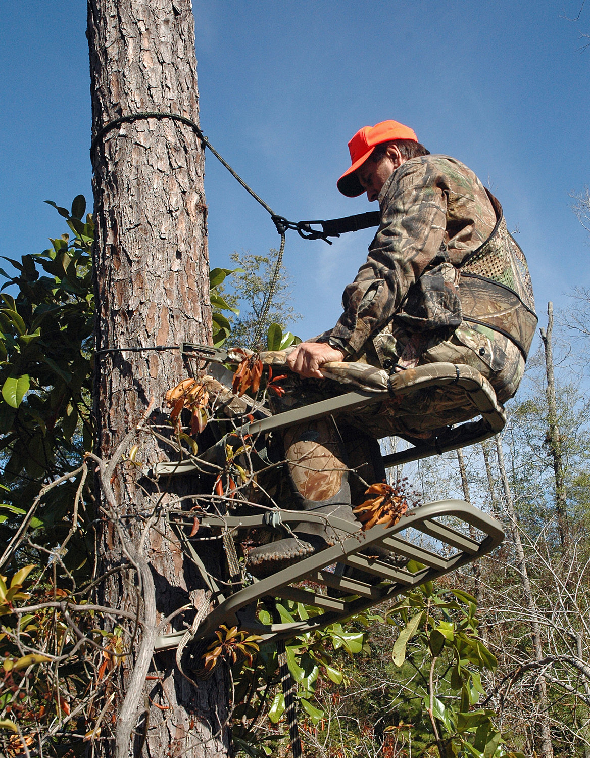 Safety harnesses should be worn and be attached the tree at all times when climbing or descending.