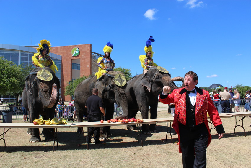 HCN_Circus1 Ringmaster Brian LaPalme informs the crowds about the Ben Hur Shrine Circus as elephants munch on a tasty feast of fruit in anticipation of the Labor Day Weekend performance