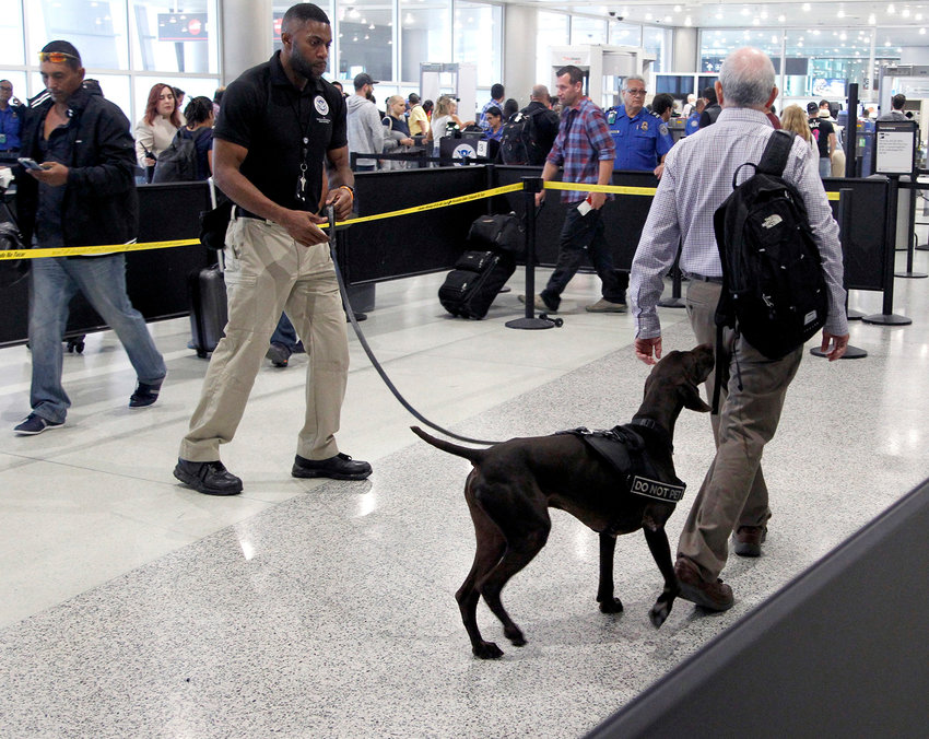 TSA officer Cedric Belvin and German short-hair pointer Angus search departing passengers for explosives at Miami International Airport in November, 2018.