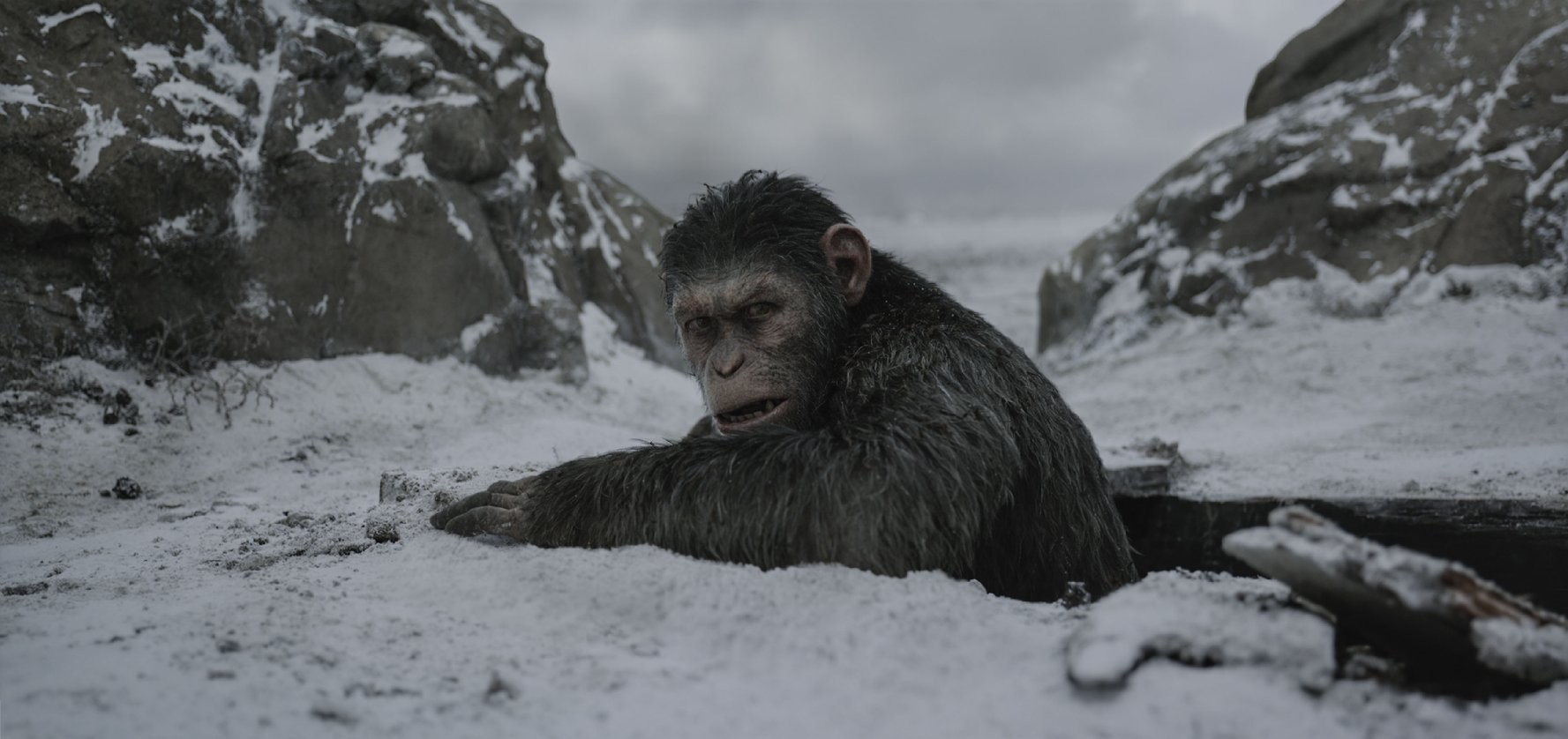 "Andy Serkis stars in ""War for the Planet of the Apes,"" which opens in area theaters next week."