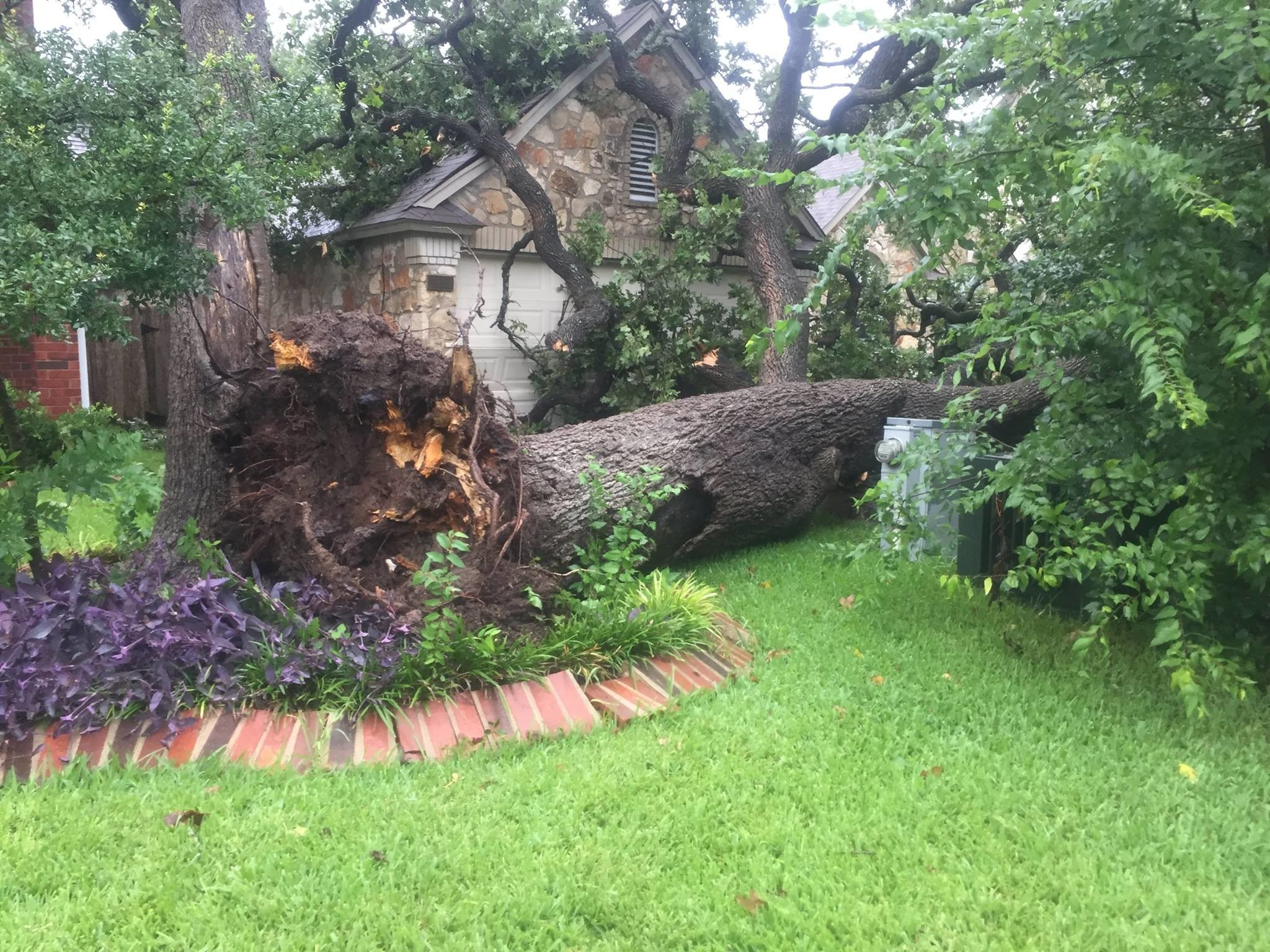 Storm damage in Cedar Park uprooted a tree from saturated root tree systems.