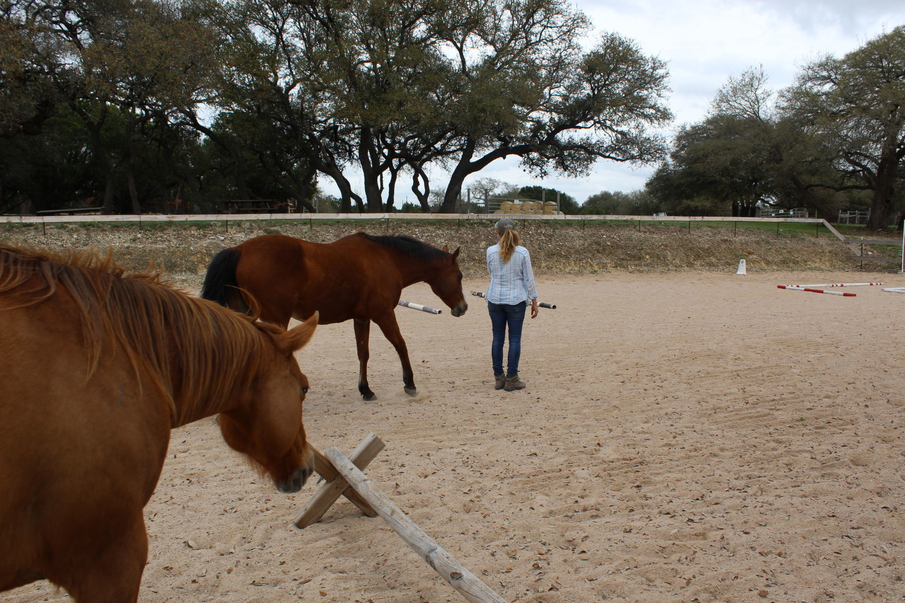 Kelly Jones, owner of South Wind Equestrian Center, shows how she uses nonverbal communication to lead horses.