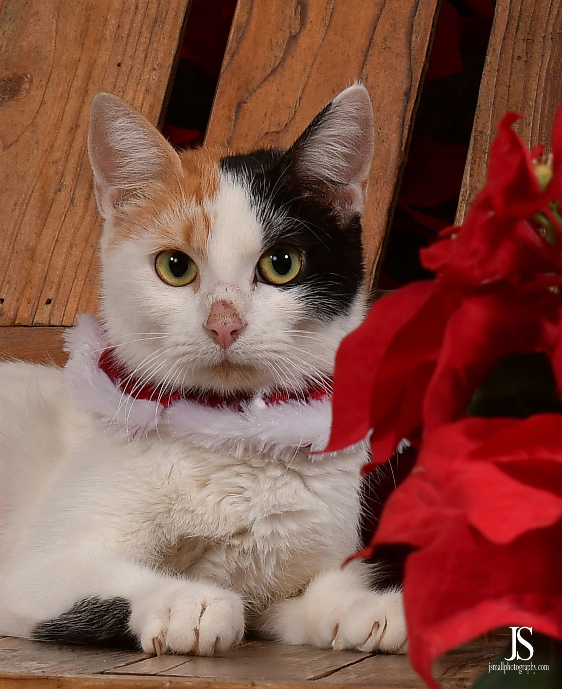 Sandy the cat hopes to go home this Christmas.