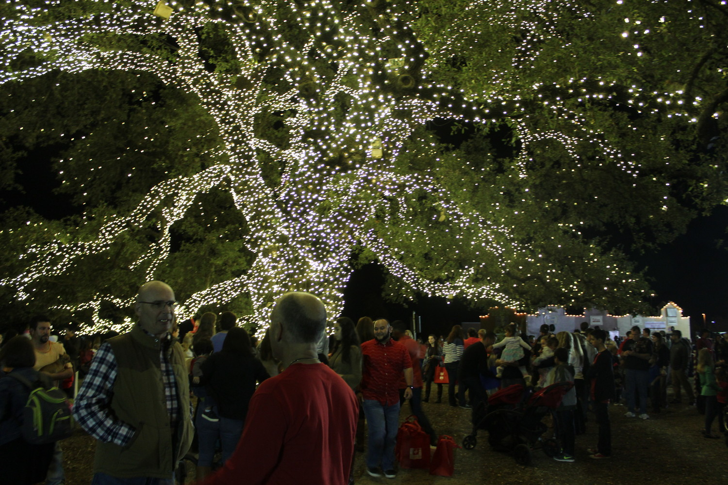 The century-old oak tree at Heritage Oak Park in Cedar Park is lit up with nearly 72,000 white lights, and will they will remain for the rest of the holiday season.