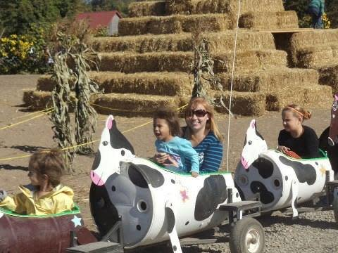 Schilter Family Farm is one of 1,200 farms in Thurston County. This scene shows an event in October, Pumpkin Patch Harvest and Corn Maze.