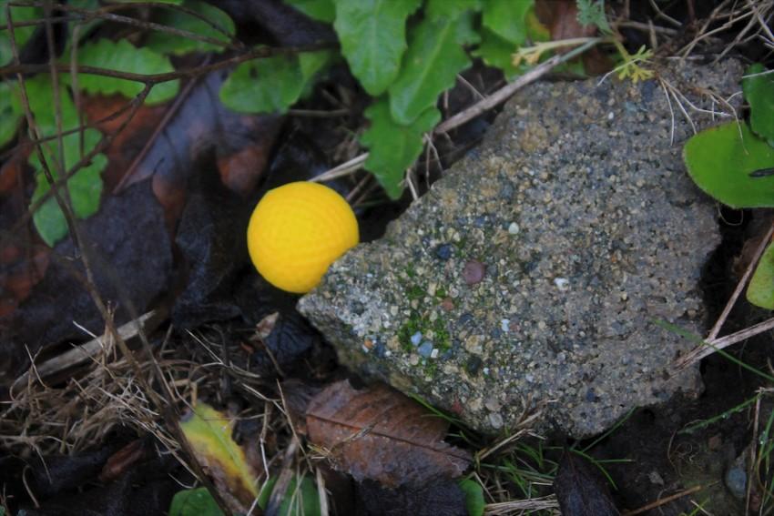 A new species of mushroom?