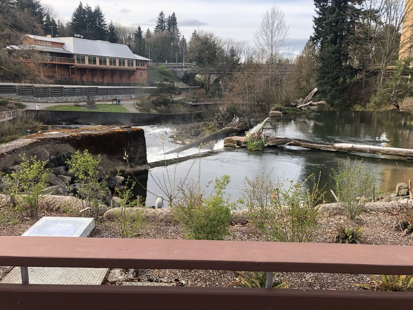 This view above Tumwater Falls was not available to the public until April 1, 2021, when the new fish hatchery and remodeled Brewery Park at Tumwater Falls reopened.