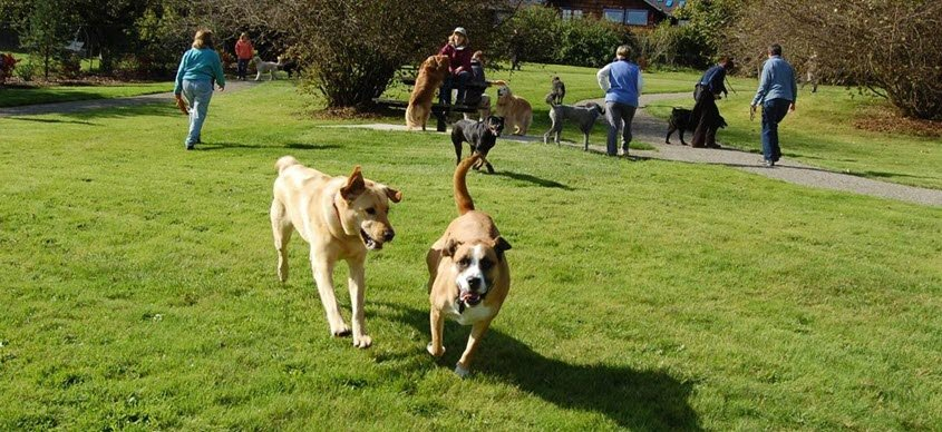Olympia announced the opening of three new dog parks including Evergreen Park, Mclane Park, and Ward Lake Parcel on Sept. 21, 2021.