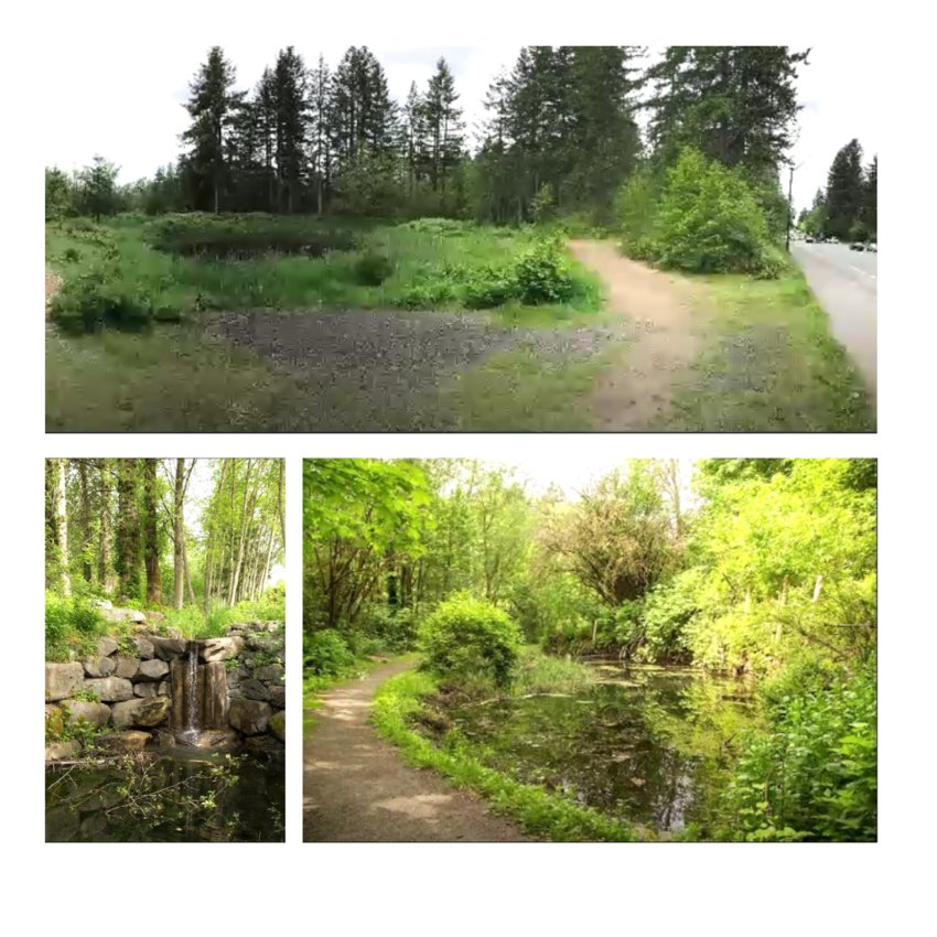 The Olympia Parks, Arts and Recreation Department recently took over the management of four city properties including Yauger Wetlands (above) and Indian Creek (both images below) .
