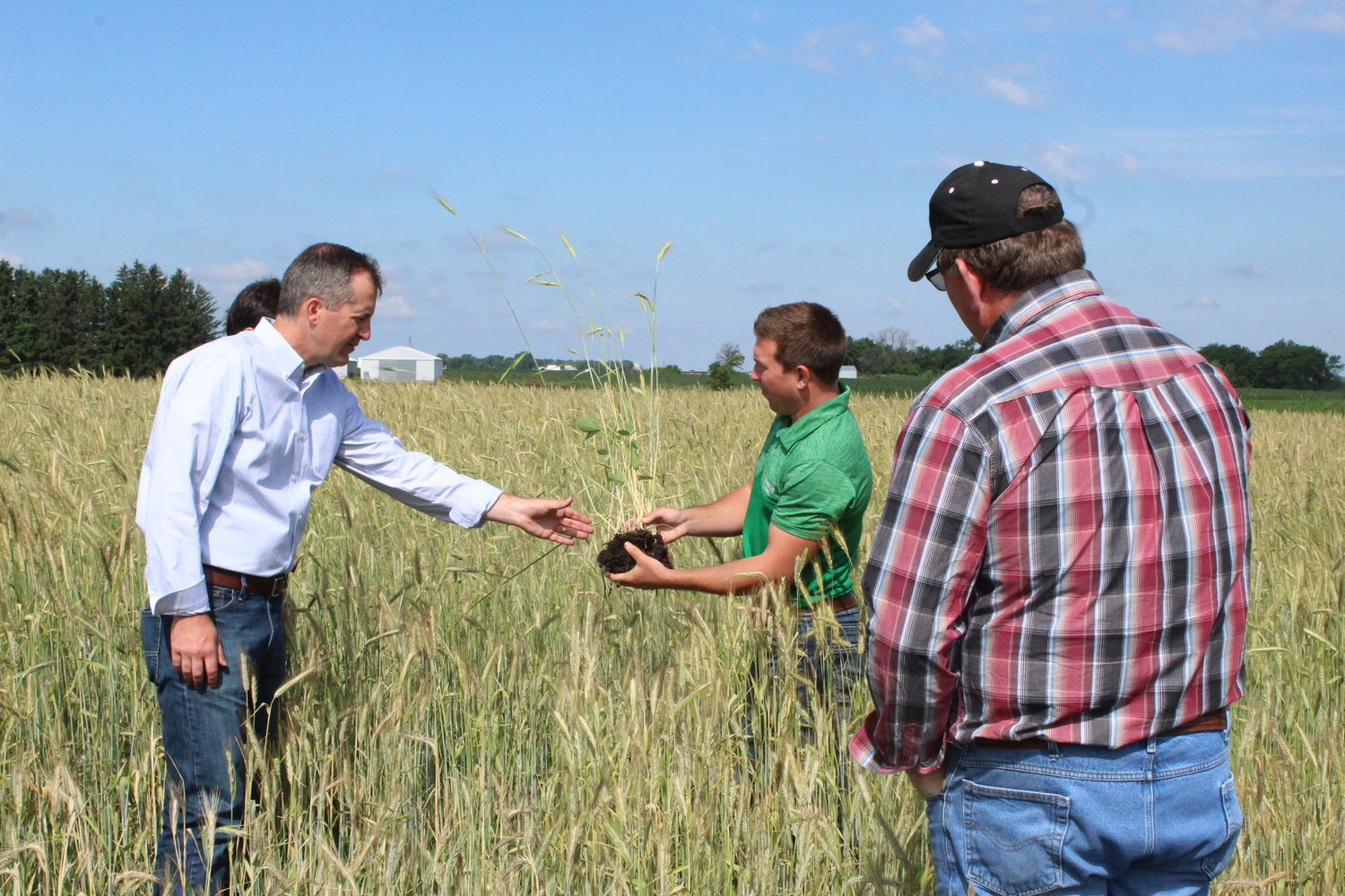 Continuum Ag CEO Mitchell Hora shows off a 'relay crop' of cereal rye and soy growing in the same soil to state officials at a tour in late June. From left, Iowa Secretary of Agriculture Mike Naig, Hora, and State Sen. Kevin Kinney.