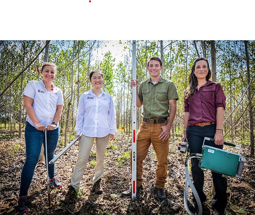 Associate Professor Courtney Siegert, from left, Assistant Professor Qin Ma, Assistant Professor Austin Himes and Assistant Professor Heidi Renninger, all in the Department of Forestry in Mississippi State's College of Forest Resources, visit a hybrid poplar plantation research site in Monroe County.