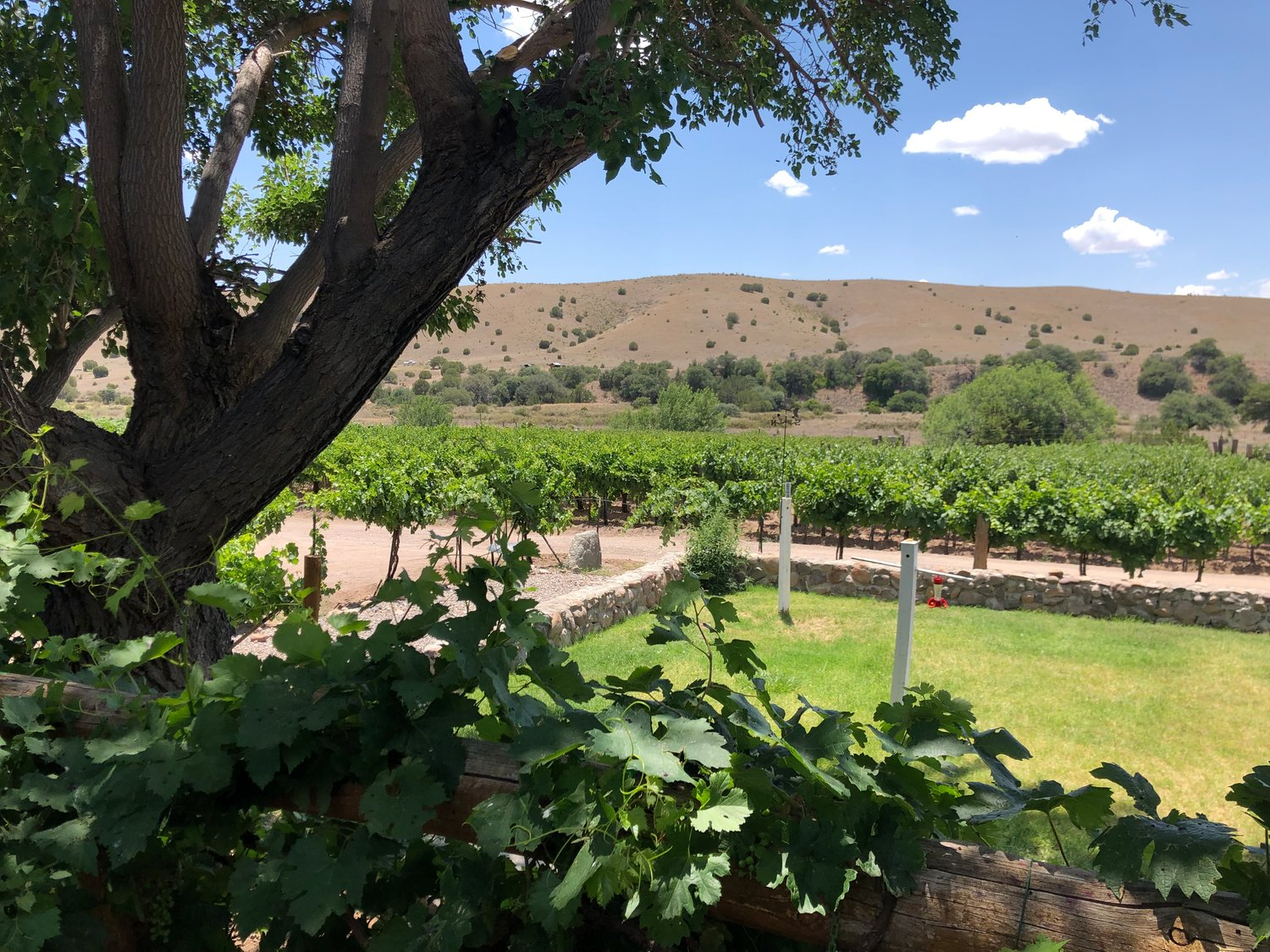 The fields of La Esperanza Vineyard and Winery spread across the desert valley, bringing a lush business to the land.