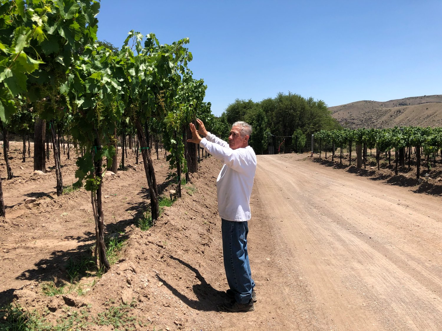 David Gurule points out the mission grape area at La Esperanza.