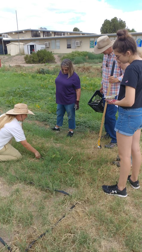 Urban garden lead coordinator Rachel Ryan demonstrates seed planting as volunteers Nancy Tipton, standing, center, and Lily Marquez, far right, look on. Between Tipton and Marquez is Doña Ana Soil and Water Conservation District Supervisor Craig Fenske.