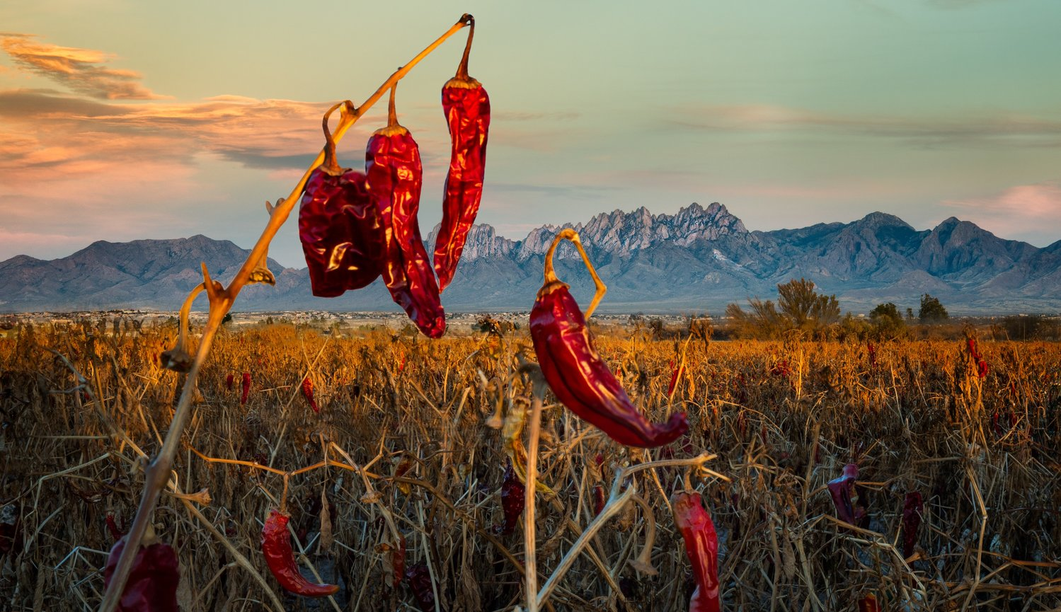 Another image from Valley Drive (about half a mile north of Picacho). Saw this scene on Thanksgiving day and went back several times until I got the image I wanted: New Mexico and chiles. By the way, it was several years later that I learned to spell chile the New Mexico way.