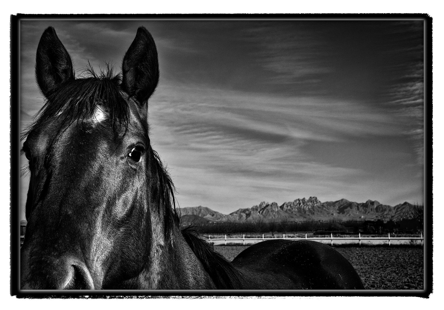 I love driving on North Valley looking for photographs; there's one horse ranch I stop at. There are a couple of issues: The horses may be merely grazing, not an especially compelling image; or, the horses may be attracted to me and hang around too closely, again, not a compelling image. On this day, the horse wandered over and was too close; but, then, some noise west of us caught its attention; that pose I liked.