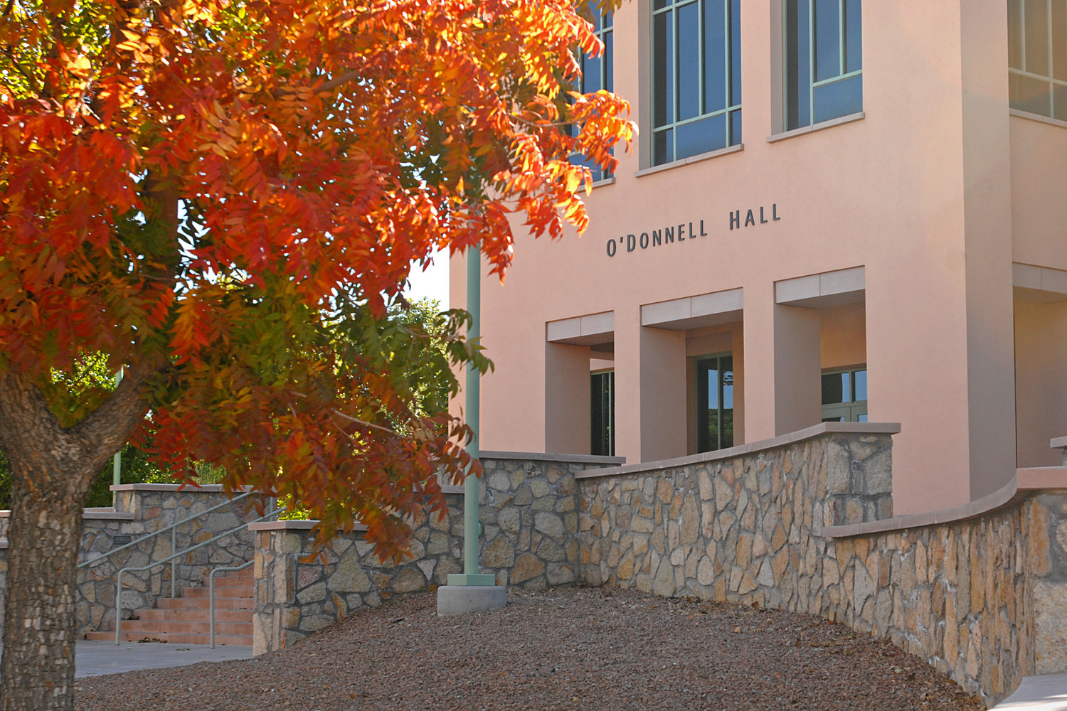 Leaves change colors outside of O'Donnell Hall as fall arrives on the NMSU campus.
