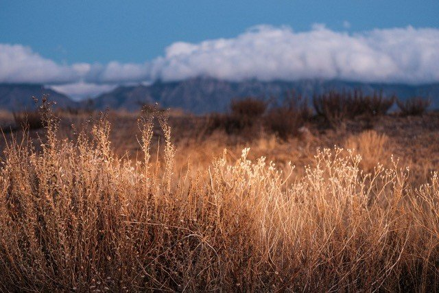 "Thomas Gallagher took third in the Artforms Annual Members Show for his photograph, ""Desert Brush Still Life."""