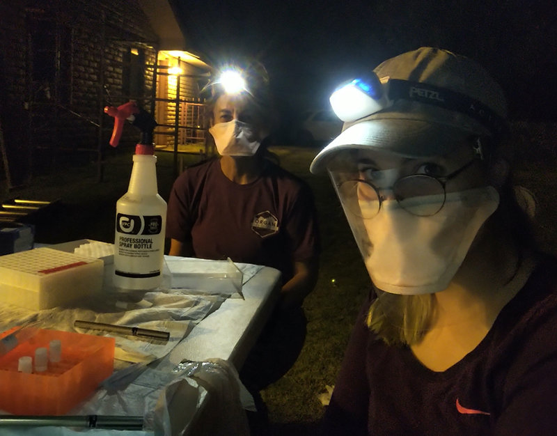 From left: Co-principal investigator and NMSU regents professor of biology Kathryn Hanley sits with Lauren MacDonald, NMSU biology graduate student, in a testing area to examine Southwest bats for COVID-19.