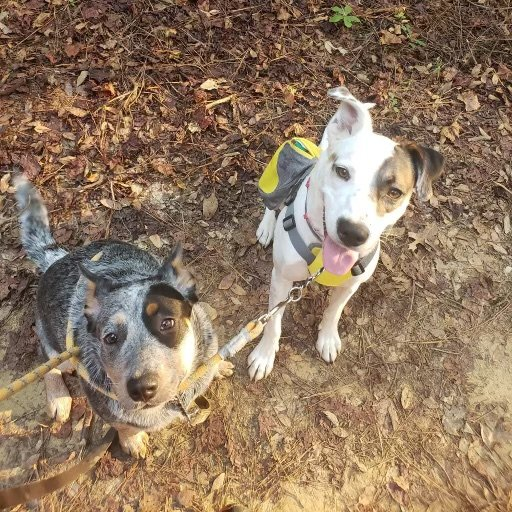 Gluckstadt firefighters recently rescued Luna, a blue heeler, and Maggie, an English pointer, from a house fire in the Wellington subdivision.