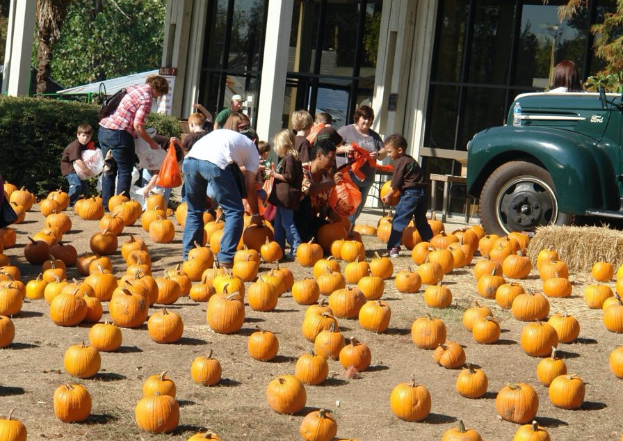 As one of the many highlights of the Mississippi Agriculture and Forestry Museum's Pumpkin Adventure, each child gets to take home a pumpkin of their choice. The annual Pumpkin Adventure will take place October 7-10, 14-17 and 21-24 from 9:00 a.m. to 12:00 p.m. on weekdays and 9:00 a.m. to 3:00 p.m. on Saturdays.