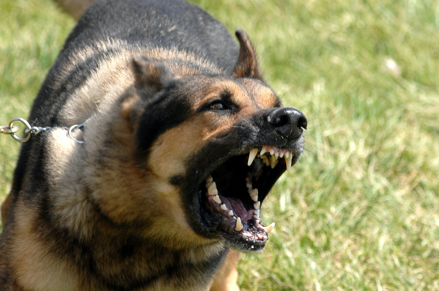 A complaint about a barking dog that has involved an arrest were heard Nov. 3 by the Philadelphia Mayor and Board of Aldermen.