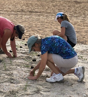 Staff from the GTM Reserve and Northeast Florida Aquatic Preserves, as well as community volunteers, plant sea oats along the GTM beach to protect the shoreline during hurricane season.