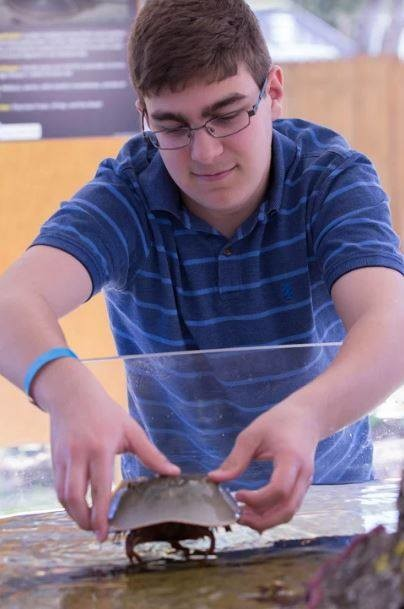 Cooper Huskey interacts with a horseshoe crab at the aquarium.