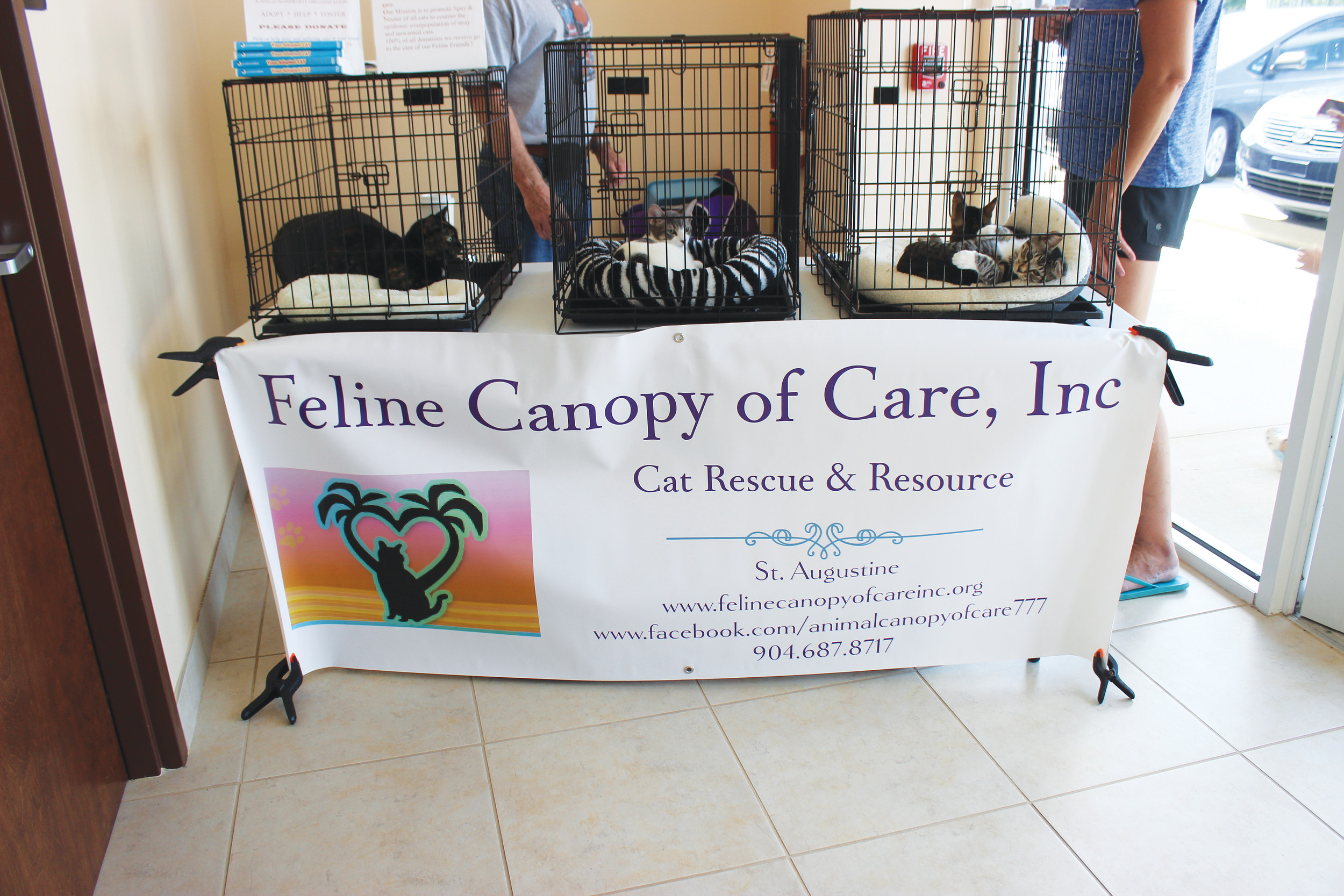Kittens available for adoption through Feline Canopy of Care, Inc,, were at the clinic's grand opening. Feline Canopy of Care, Inc., is a rescue, adoption and resource group for homeless cats. The nonprofit group is a volunteer, foster home-based, no-kill cat rescue, which gives adoptable cats the opportunity to live together in foster homes rather than public shelters. All cats and kittens are fully vetted, including vaccinations, spaying/neutering and flea prevention prior to adoption. For more information or to see available cats and kittens, go to www.felinecanopyofcare.org.