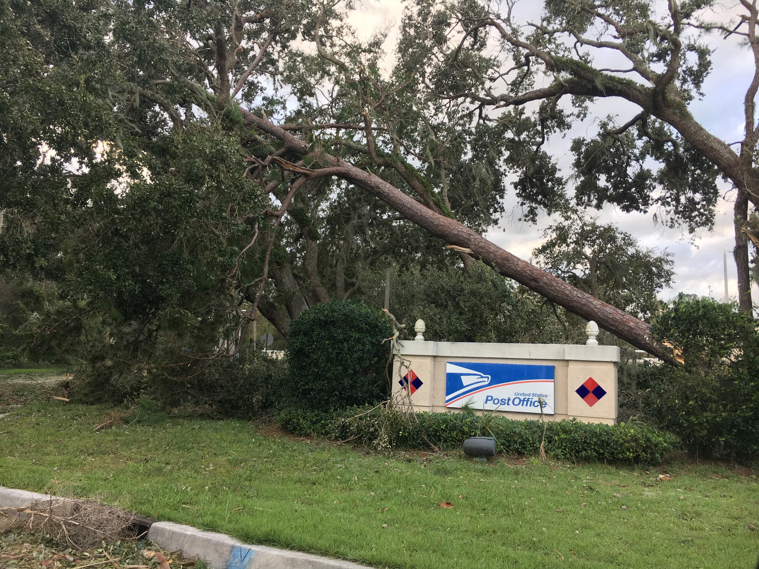 A tree collapses outside the Post Office in Ponte Vedra Beach.