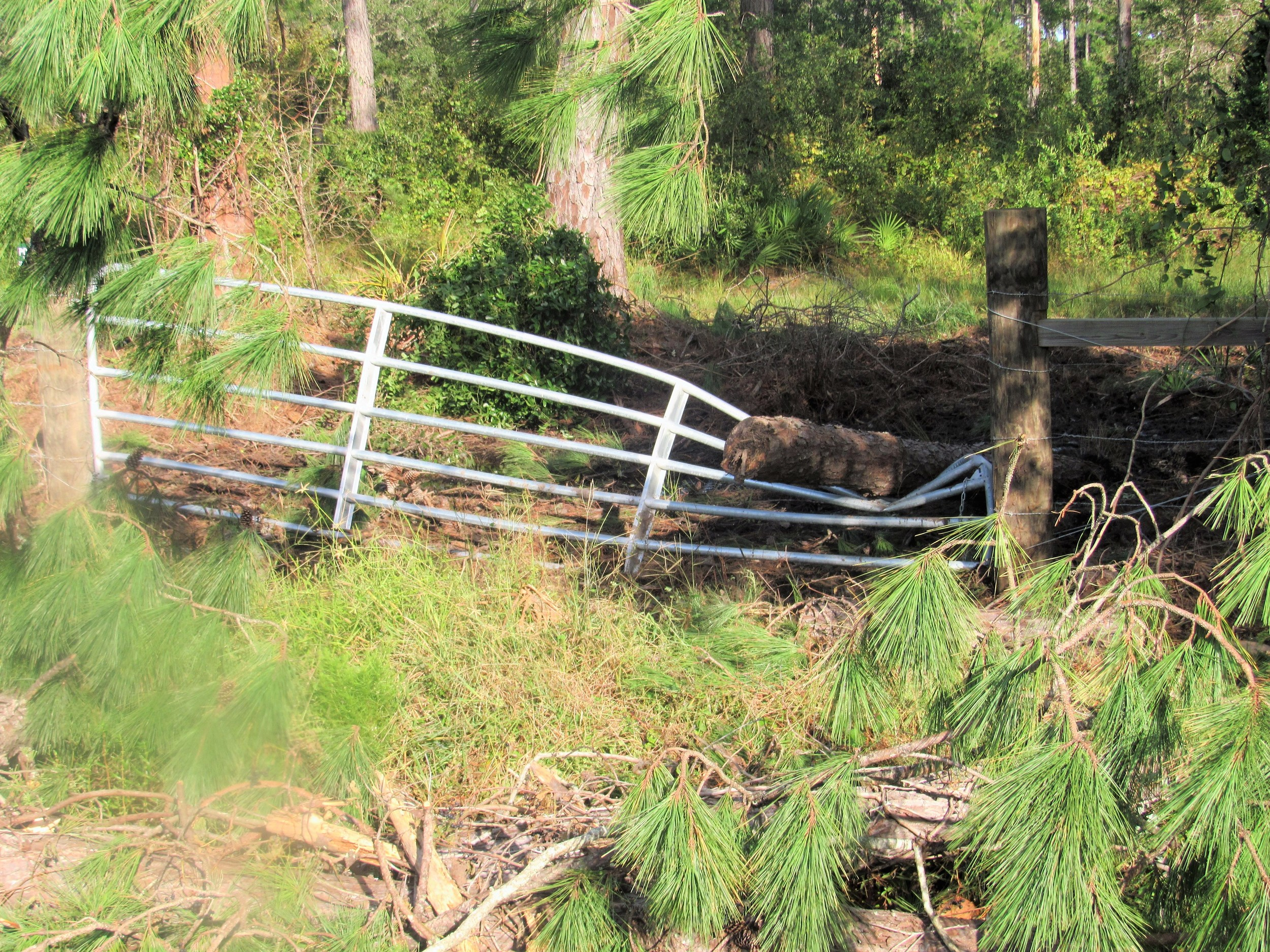 A Mickler Road fence is left damaged by the trunk of a downed tree.