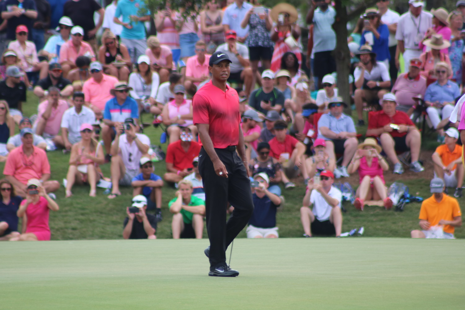 Tiger Woods walks around a green as fans gaze in amazement from afar.