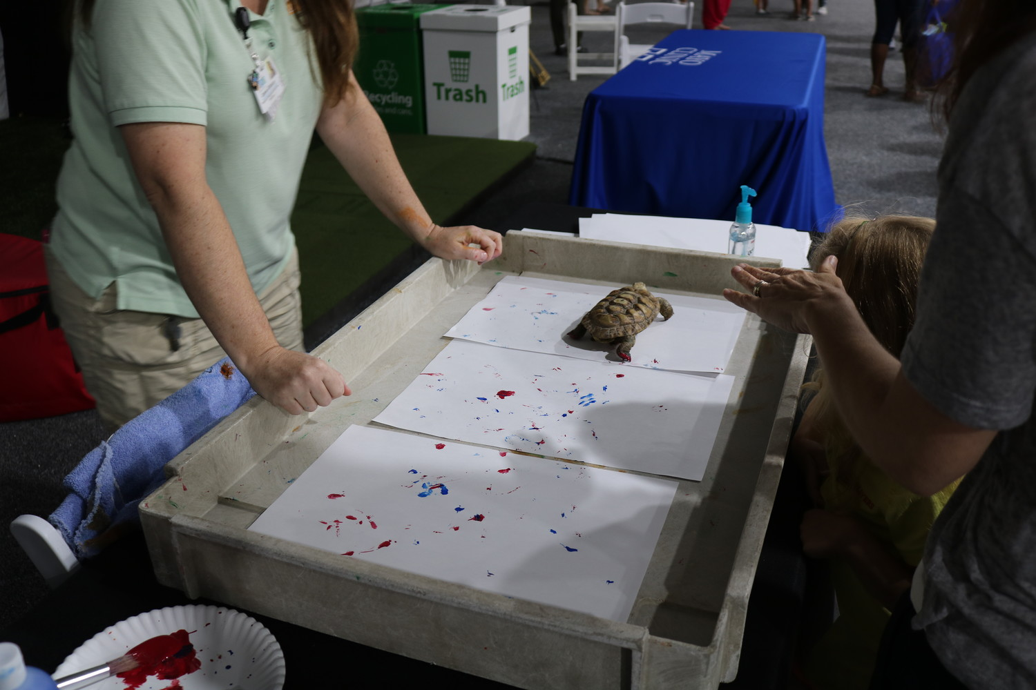 A turtle makes a work of art at the Jacksonville Zoo booth.
