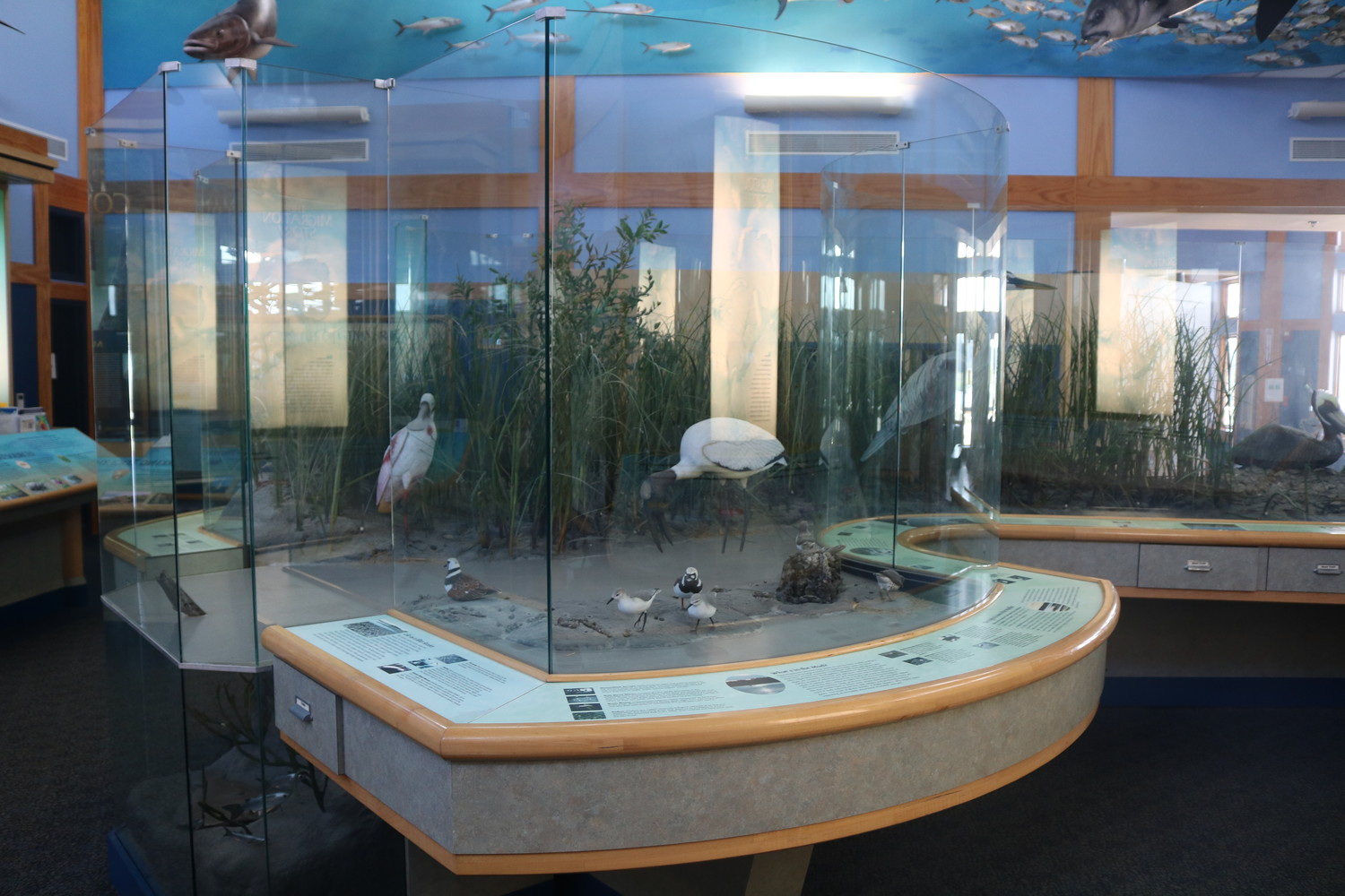 Visitors can enjoy exhibits at the GTM Reserve's Environmental Education Center, located at 505 Guana River Road in Ponte Vedra Beach.