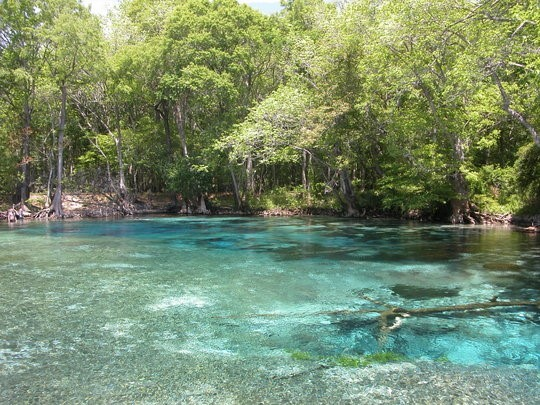 The Florida Department of Environmental Protections has announced a new Septic Upgrade Incentive Program to enhance the water quality and protection of Florida's springs.