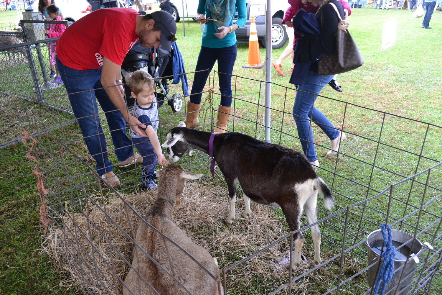 A little one gets up close and personal with a few animals in the petting zoo.
