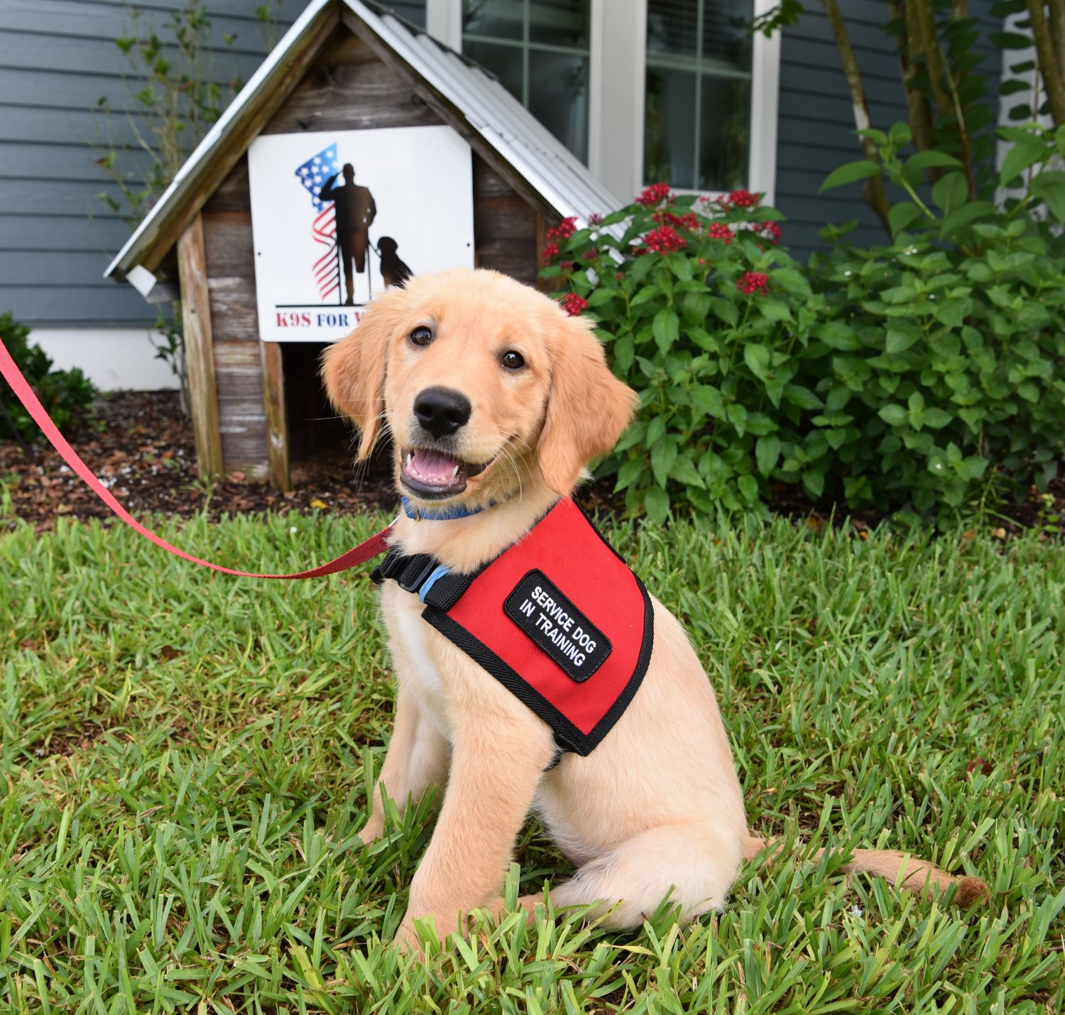K9s for Warriors is looking for puppy raisers in the area to help get dogs ready to pair with veterans.