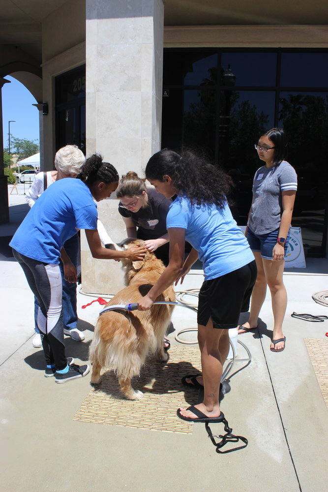 Guests at Bubbles & Barks enjoy interacting with dogs at the event.