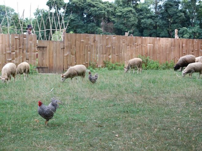 Livestock roam at Coggeshall Farm in Bristol