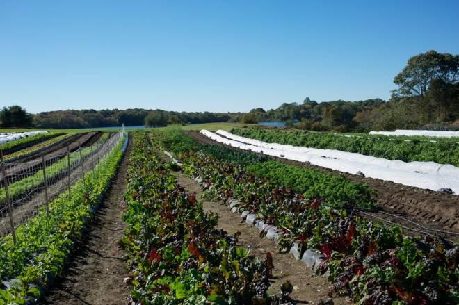 Matunuck Vegetable Farm