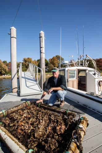 The bounty of the Rhode Island Oyster Gardening for Restoration and Enhancement program at Roger Williams University