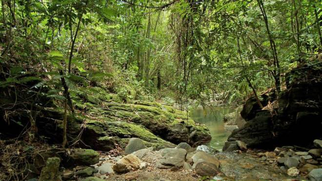 Fondes Amandes river and forest are thriving from local restoration efforts